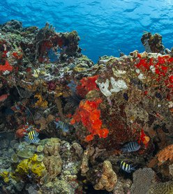 Diving in Dominica: A World Class Experience