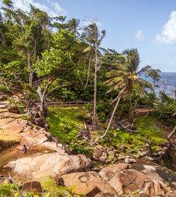 Emprunter le seul « vrai » sentier de randonnée des Caraïbes