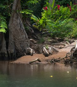 Glisser à travers la jungle sur l'Indian River, la rivière enchantée de la Dominique