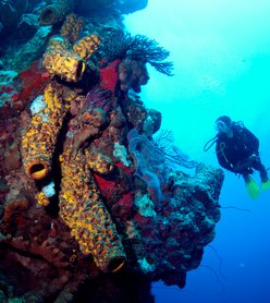 Dive In Our Nature: Five Fabulous Ocean Activities in Dominica