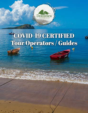 Tour _Taxi_Operators_listing